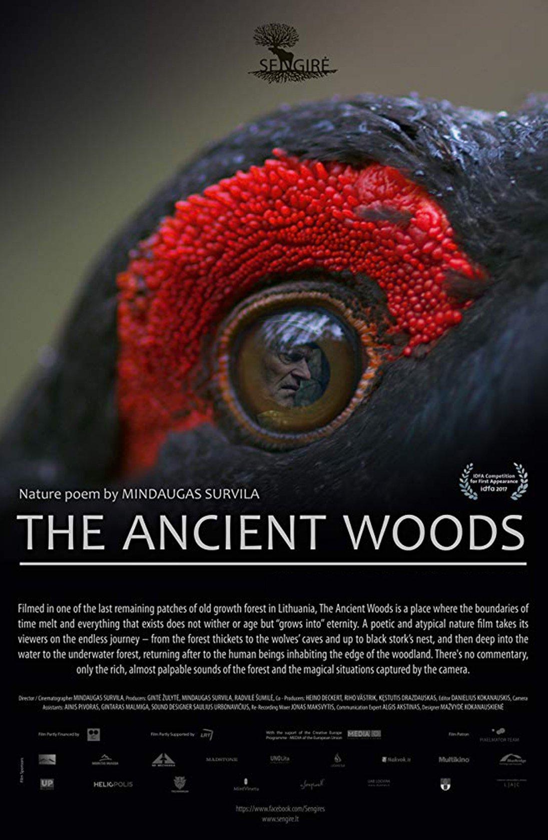 ExpiredBozeman Doc Series: The Ancient Woods